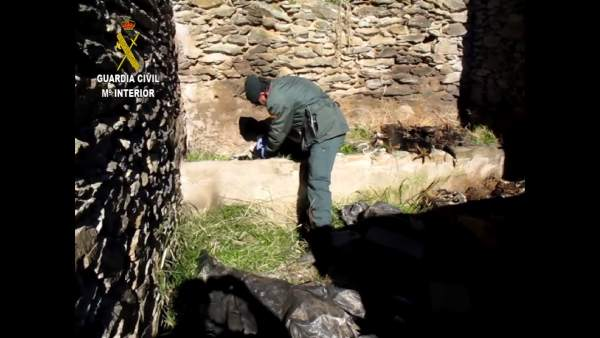 La Guardia Civil localiza los cadáveres de ocho perros
