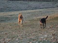 La síndica de Barcelona propone regular la limitación horaria en las zonas de recreo para perros