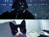 Darth Vader, en versión felina