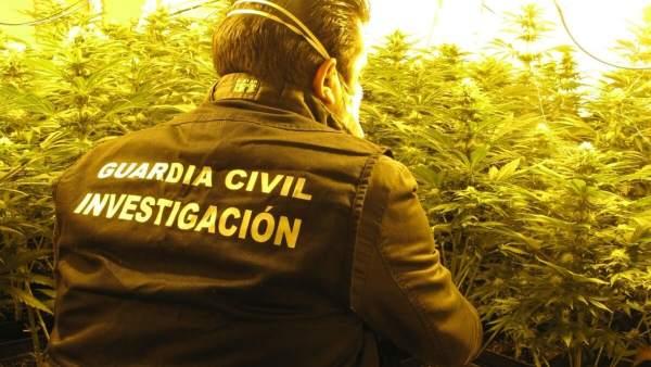 Agente interviene una plantación de marihuana en Atarfe