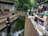 Lamentables condiciones de unos osos