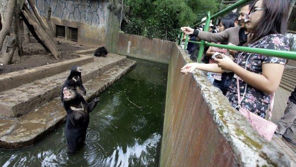El zoo en el que los animales suplican comida