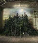 Un bosque dentro fe una mansión