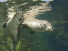 La caza de leones y osos marinos alteró el ecosistema