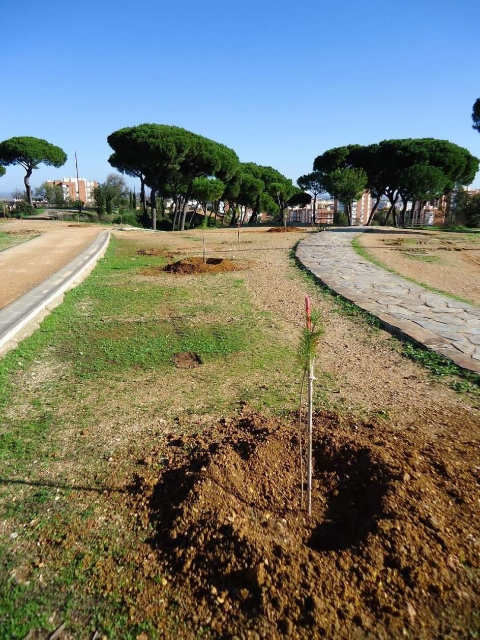 Sucesos destrozan plantas de rboles aut ctonos y en for Vivero del parque