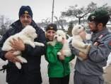 Rescatan tres cachorros