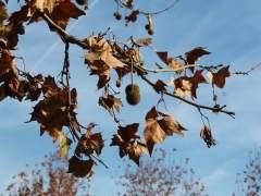 Madrid ordena talar casi 10.500 árboles por riesgo para la ciudadanía