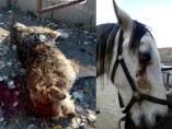 Animales asaltados