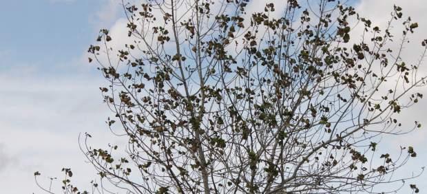 Un árbol en otoño, imagen de archivo