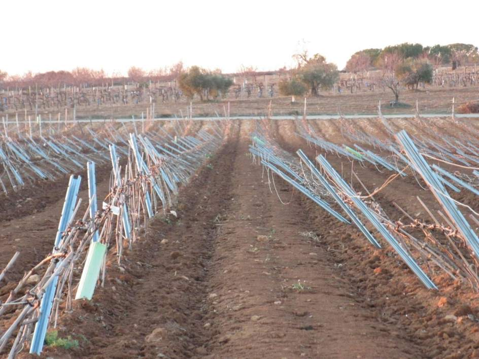 Agricultores de requena utiel descubren da os graves en for Pisos en utiel