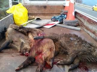 Animales retirados por conservación de carreteras
