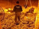 Operación contra el cultivo de marihuana en Jayena