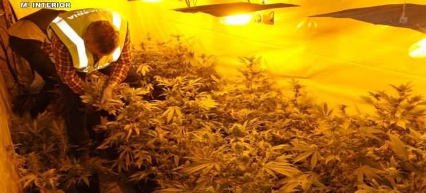 Marihuana intervenida en Boiro (A Coruña)