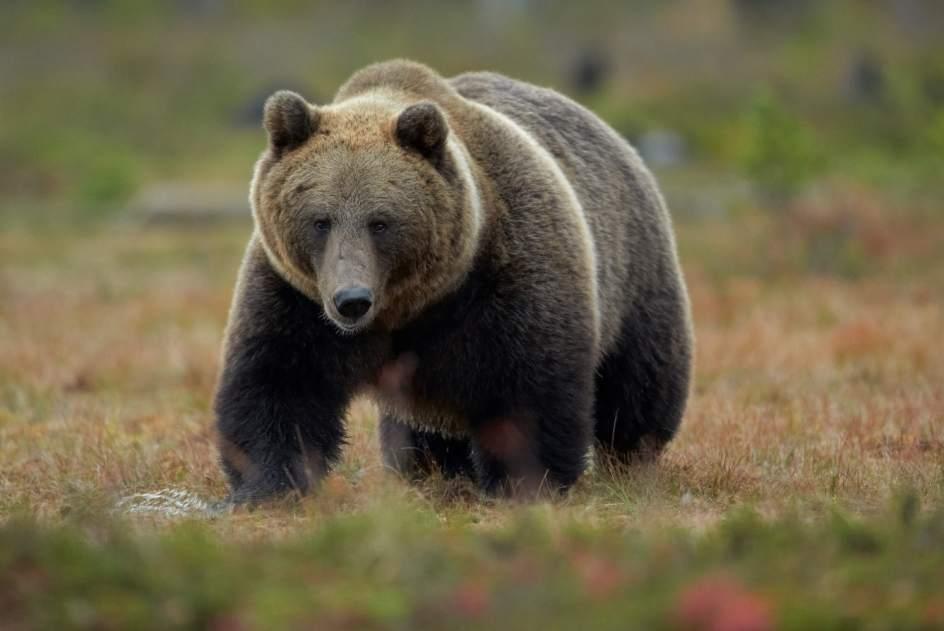 un oso arranca la mano a un ni o que le daba de comer en un zoo palestino. Black Bedroom Furniture Sets. Home Design Ideas
