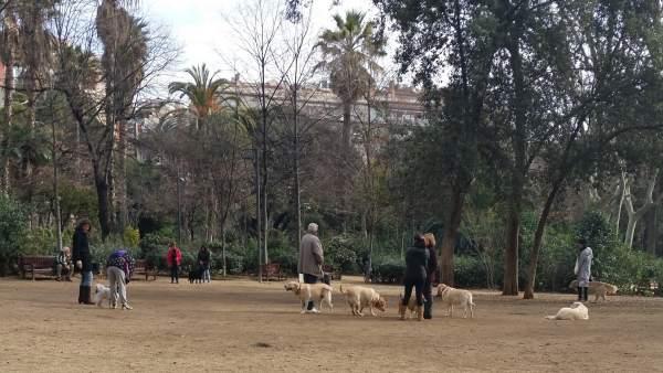 Perros en el Turó Parc