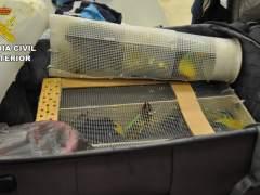 Aves incautadas