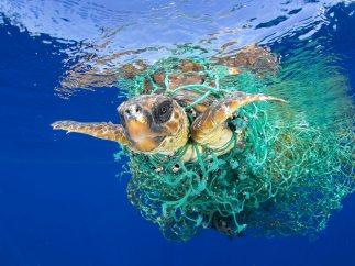 'Caretta Caretta atrapada', mejor foto de Naturaleza