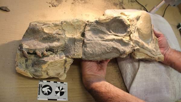 Dinosaurio de hace 180 millones de años, Isaberrysaura mollensis
