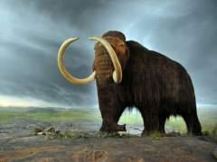 Los mamuts se organizaban en matriarcados