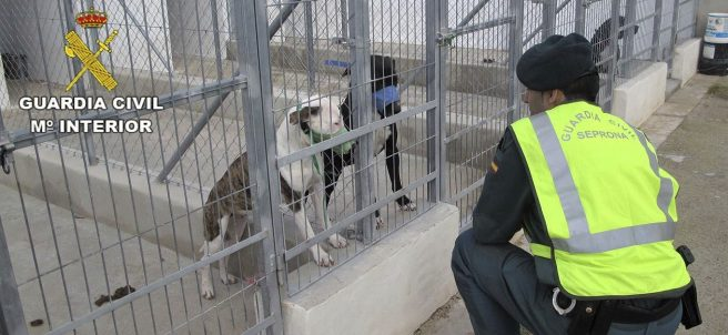 Varios perros, en una foto de la Guardia Civil