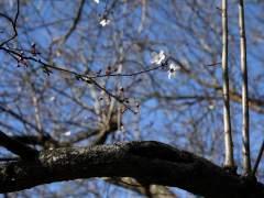 Un anticiclón dejará temperaturas primaverales en la Península hasta el viernes