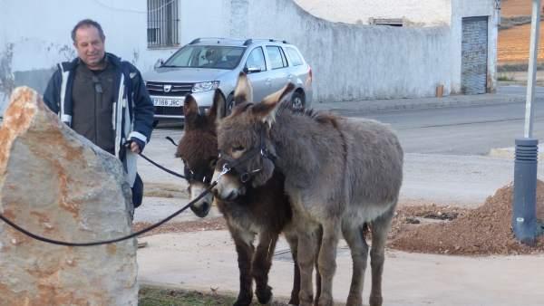 Benagéber 'adopta' a dos burros