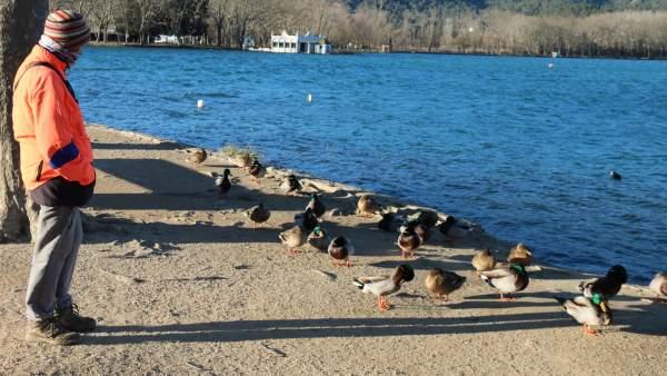 Una mujer mira de cerca a un grupo de patos en el lago de Banyoles de Girona.