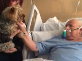 La inesperada visita perruna a un paciente en el hospital