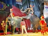 Elefantes de circo