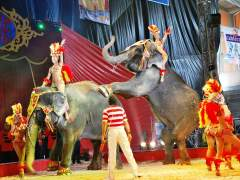 El debate sobre los circos con animales, abierto en España