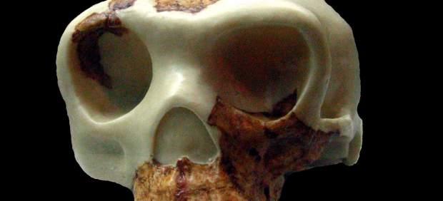 'Homo antecessor'