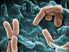 Divulgan la primera lista de bacterias resistentes a antibióticos
