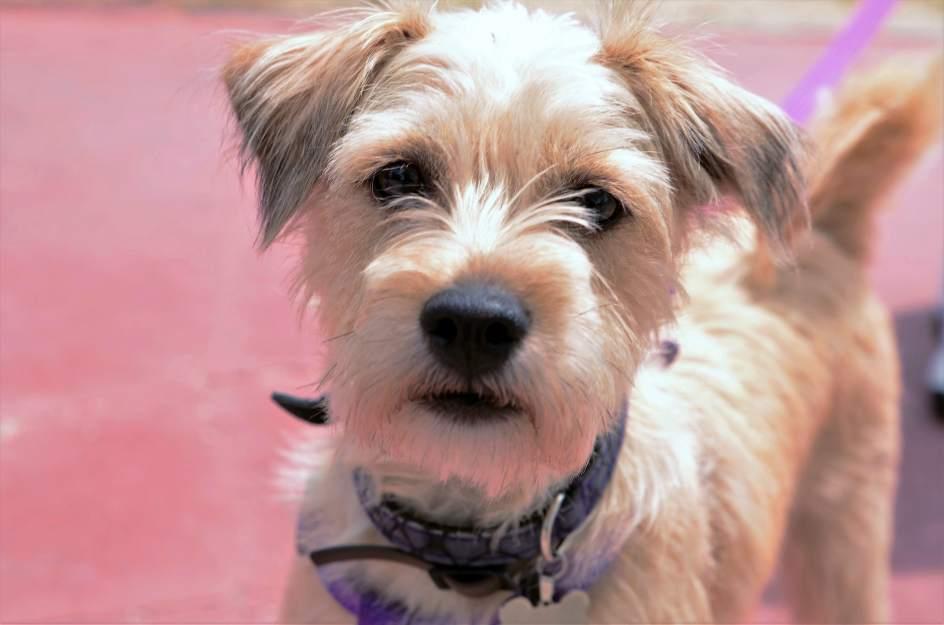 Los madrile os que quieran tener m s de cinco perros o gatos en casa necesitar n autorizaci n - Perros para tener en casa ...