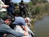 Suelta de anguilas en el río Guadalquivir