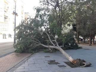 El vent ha tombat un arbre en el parc de Marxalenes