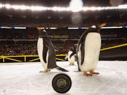 Pingüinos, NHL