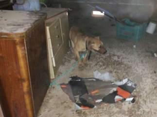 Uno de los cachorros decomisados