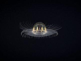 Un 'ovni' en las profundidades