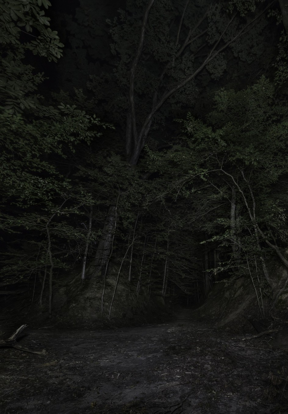 Jeanine Michna-Bales - Sunken Trace. Claiborne County, Mississippi, 2015. Foto del libro de Jeanine Michna-Bales sobre las rutas de fuga de los esclavos negros en el siglo XIX