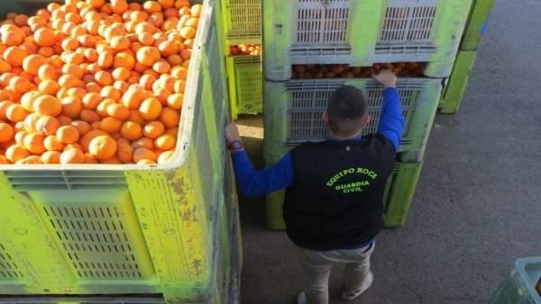 Naranjas recuperadas por la Guardia Civil