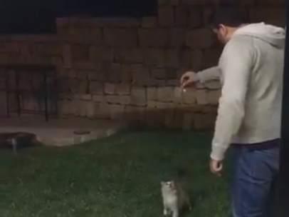 Agresión a un gato