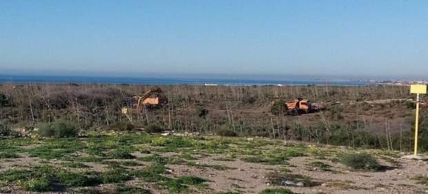 Limpieza de pitas entre Retamar y El Alquián