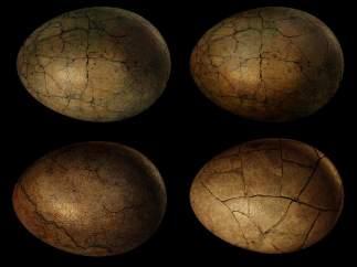 Huevos fosilizados