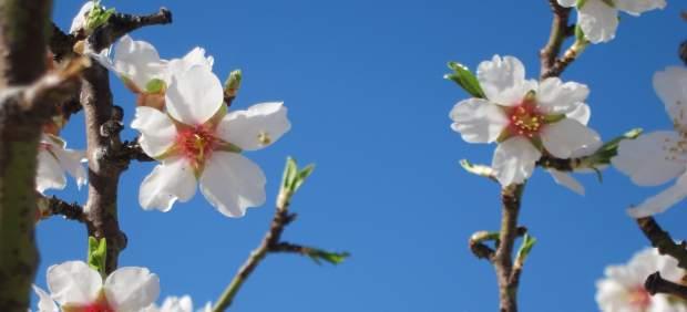 Flor, Flores, Primavera, Alergia, Plantas, Floración