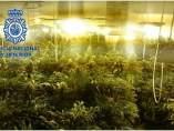 Droga incautada en Granada