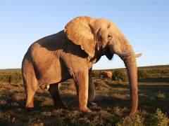 El presidente de Botsuana acusa a Trump de alentar la caza furtiva de elefantes