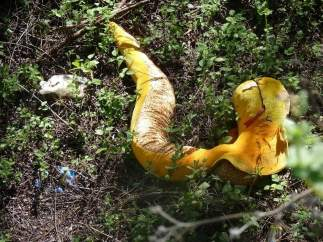 Serpiente de peluche en la ribera del río