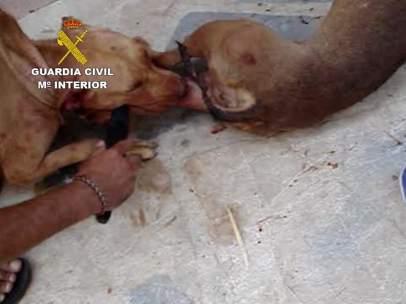 Peleas de perros en Málaga