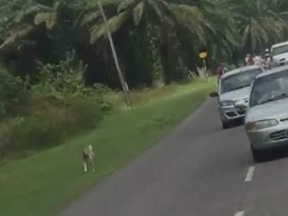 Un perro sigue el cortejo fúnebre de su dueña