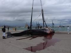Cachalote hembra localizado en el Puerto de Sagunto